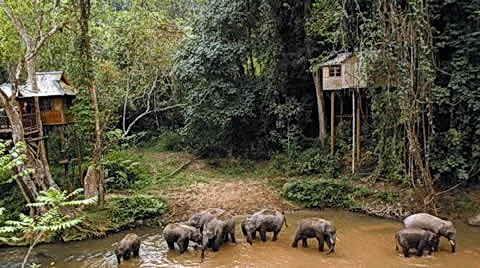 "Khmer families discovered living in Southern China where wild elephants live, like those that the ancient Khmer ""mohouts"" came to tame for the Chinese emperor on behalf of their king in Angkor."